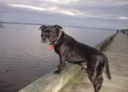 Stig taken by Delwyn Prosser on Cornwallis wharf.  Stig will receive a consolation prize of a box of Advocate