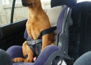 Sara safely buckled up. By Chontelle Booker
