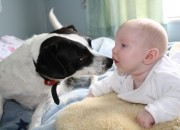 Dog and Baby taken by Janine Bradley
