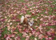 Rusty playing in the leaves- taken by Starzi Robertson
