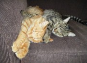 Riley and Ally have a cat nap- Taken by Amy Kellam