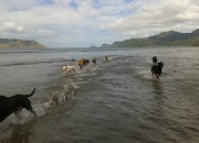 The dogs at Kakamatua - taken by Tanya Bennetto